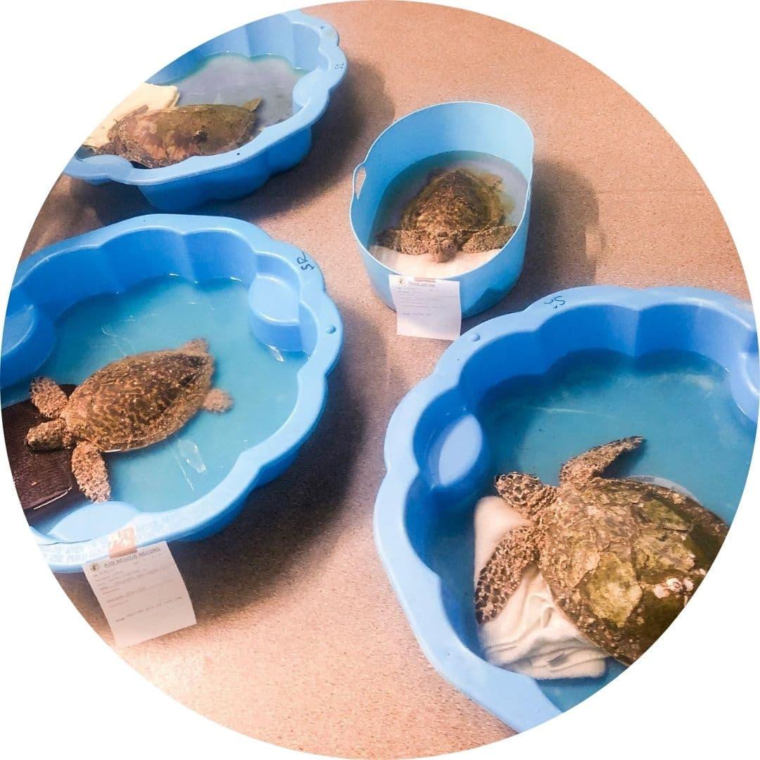 Sea Turtle Hospital Upgrade