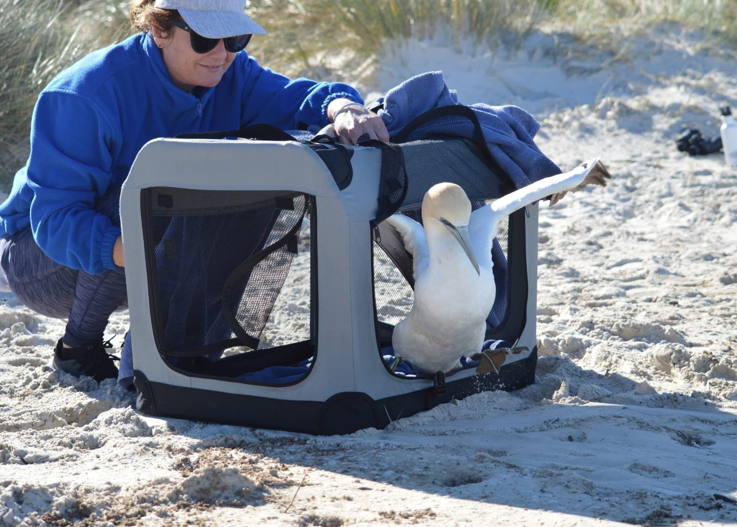 Sea Bird rescue release at the beach